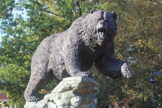 Bear photo for Nigel